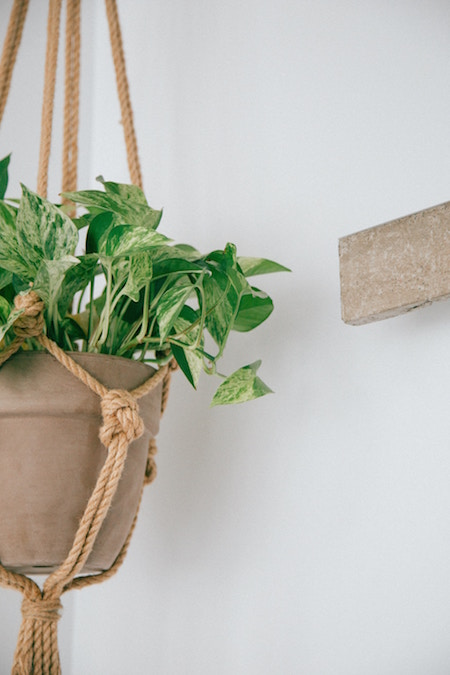 Plant with many small leaves in light beige clay pot placed in macrame hanger